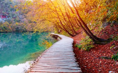 Autumnal Visualisation